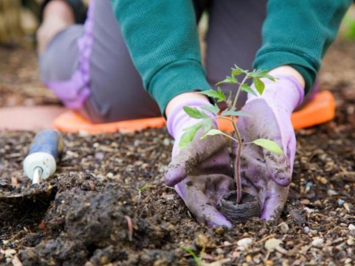 Новый закон о садоводческих товариществах с 1 января 2019 года: текст скачать, закон об СНТ, изменения для дачников в 2019 году