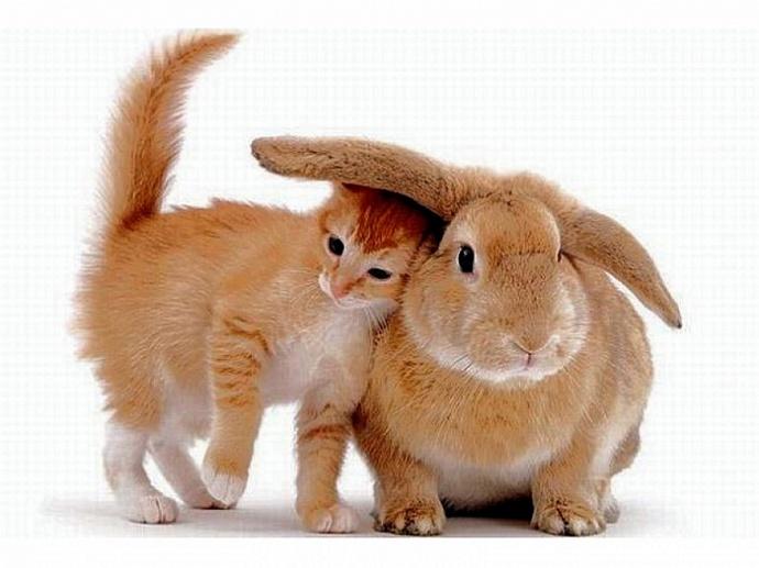Год кота и кролика восточный гороскоп