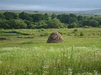 Как часто встречаются земельные споря по владению чужим земельным участком